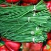 Вирощуємо шніт-цибуля з насіння