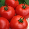 Вирощуємо урожайний томат «волгоградец»: опис і особливості сорту
