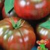 Вирощуємо «зефір в шоколаді» - томат з унікальними характеристиками: опис сорту і фото