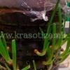 Вирощуємо зелена цибуля і зелень в пластиковій пляшці