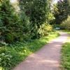 Вирощування хвойних рослин в саду лісистого типу