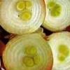 Вирощування цибулі в теплиці взимку як бізнес