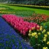 Вирощування нарцисів в саду і вдома з насіння, догляд і умови