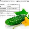 Вирощування огірків у відкритому грунті, умови і догляд