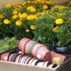 Вирощування розсадою квітів - айстри, чорнобривці, настурція