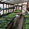 Вирощування розсади для висадки в теплицю з полікарбонату: коли сіяти і що вигідніше садити?