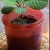 Загадковий незнайомих (помогите опознать рослина, фото всередині)