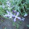 Запах квітів: вплив ароматів з мого квітника