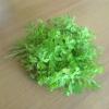 Зелень кропу і петрушки в домашній косметології