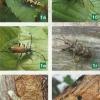 Жуки-вусачі - шкідники саду, заходи боротьби з ними