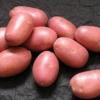 «Журавушка» - картопля високого врожаю: опис сорту, характеристика, фото